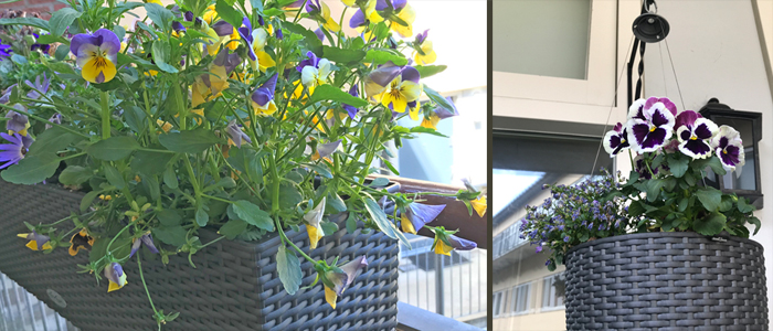 self-watering planter baskets on balcony in The Hague Netherlands